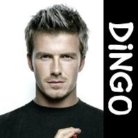 Dingo_icon.jpg