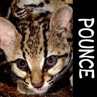Pounce_icon.jpg